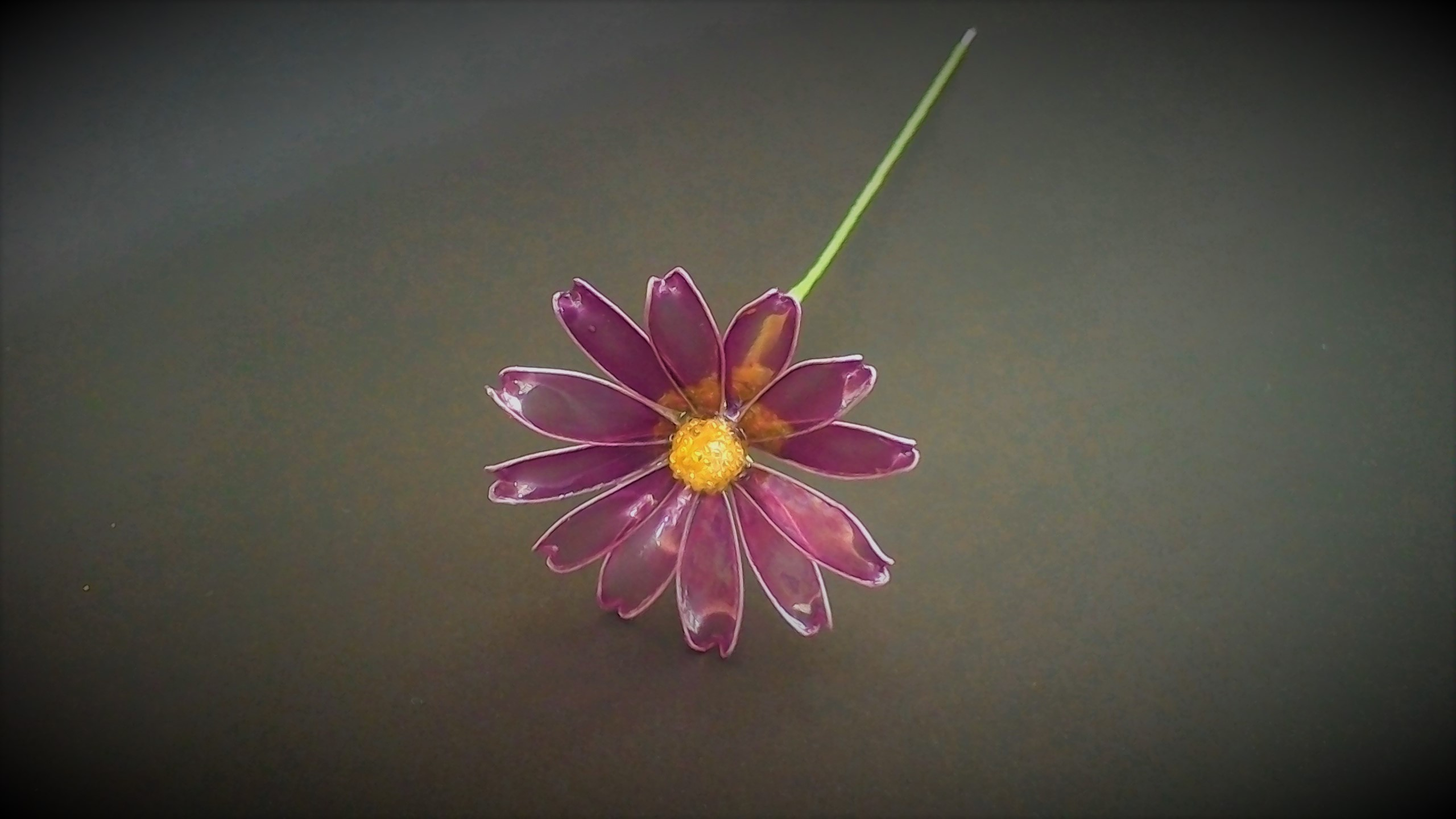 marguerite gakutuki purple